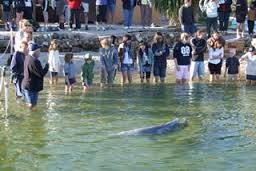 Dolphin Feeding Tour - Rainbow Beach
