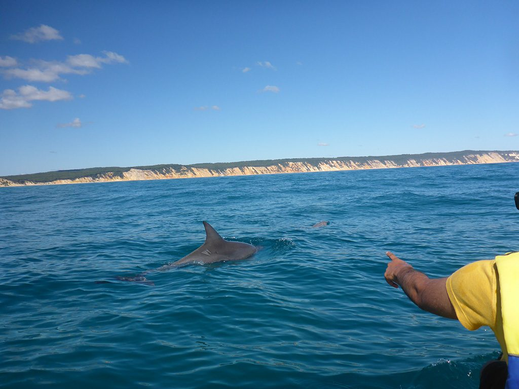 Dolphin View Kayak  Great Beach Drive Adventure - Noosa day tour