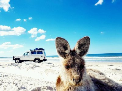 Bribie Island 4X4 Adventure tour (Sunshine Coast Pickup)