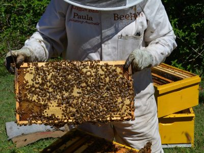 Introduction to Bee Keeping
