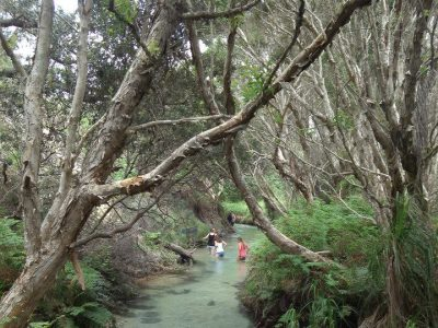 Fraser Island 2 day Camping Tour