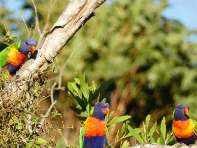 Birdwatching & Wildlife Experience - Full Day